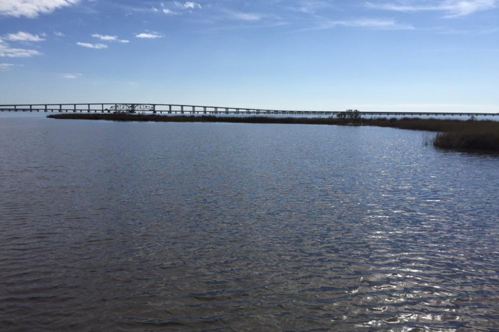Marsh and shoreline habitat on Bay St. Louis in Mississippi.