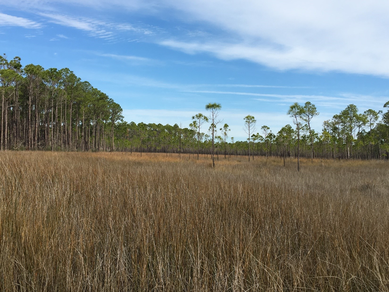 Tall grasses and trees in a marsh landscape in Mississippi.