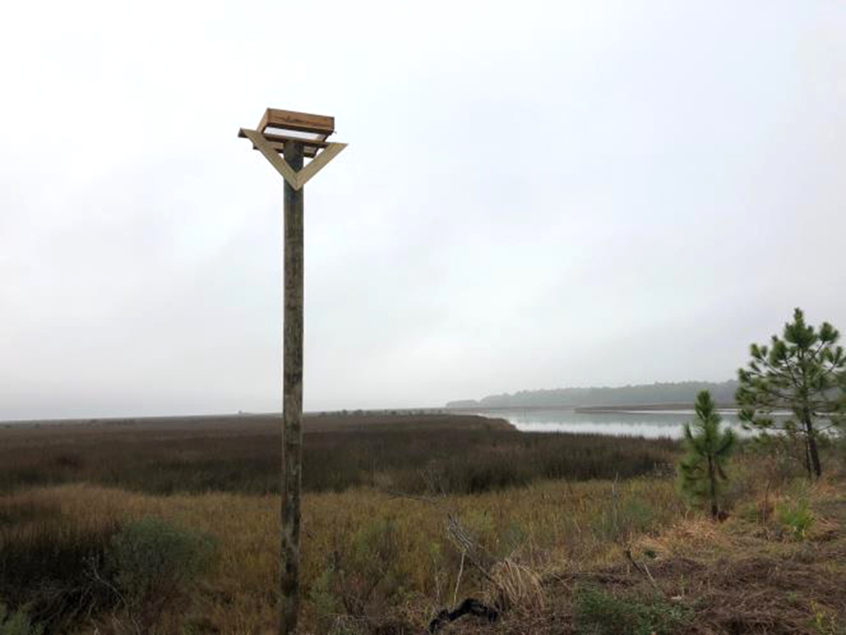 One of multiple osprey nesting platforms installed in Alabama to support restoration of their populations.