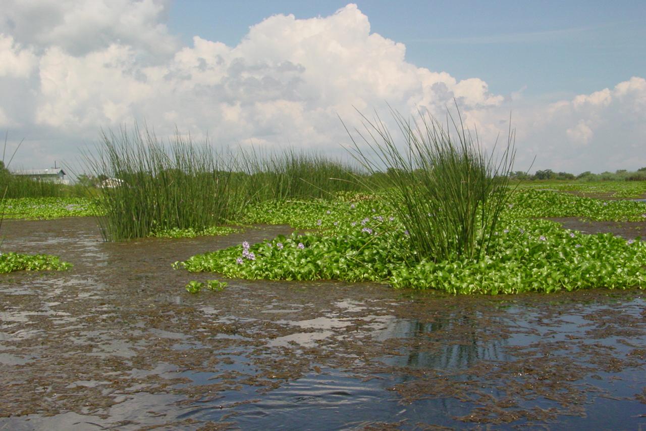 CWWPRA marsh restoration project. Image credit: USDA NRCS