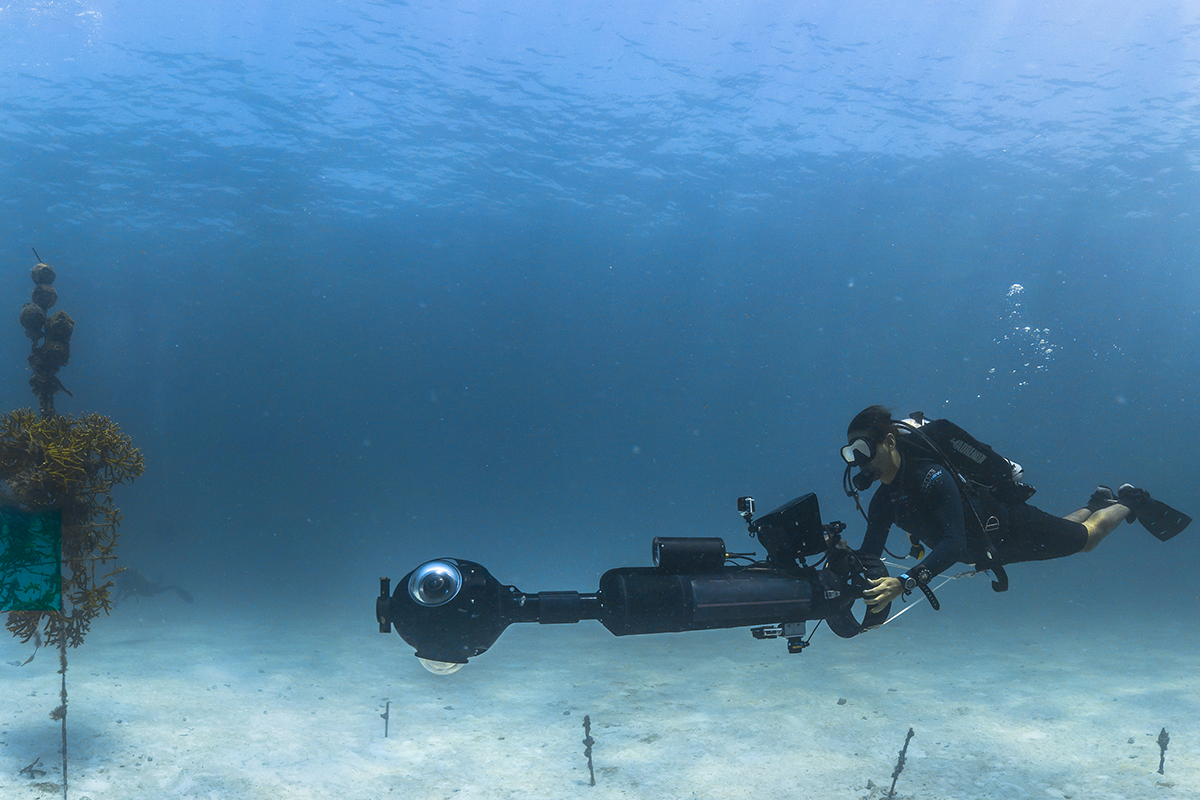 A diver operates a camera in a coral nursery.