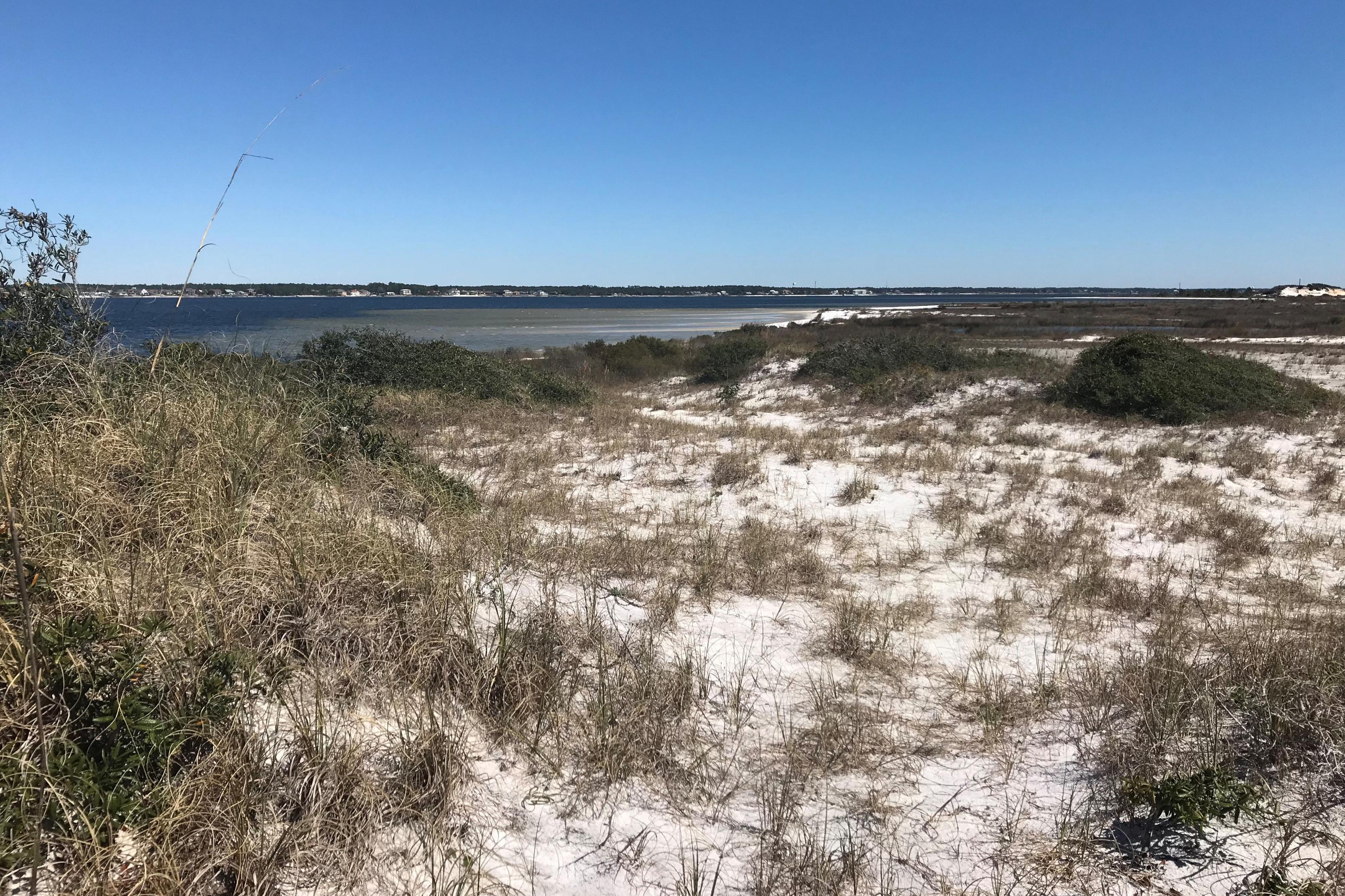 Sandy dunes and dune vegetation on Florida's coast - at Navarre Marine Park
