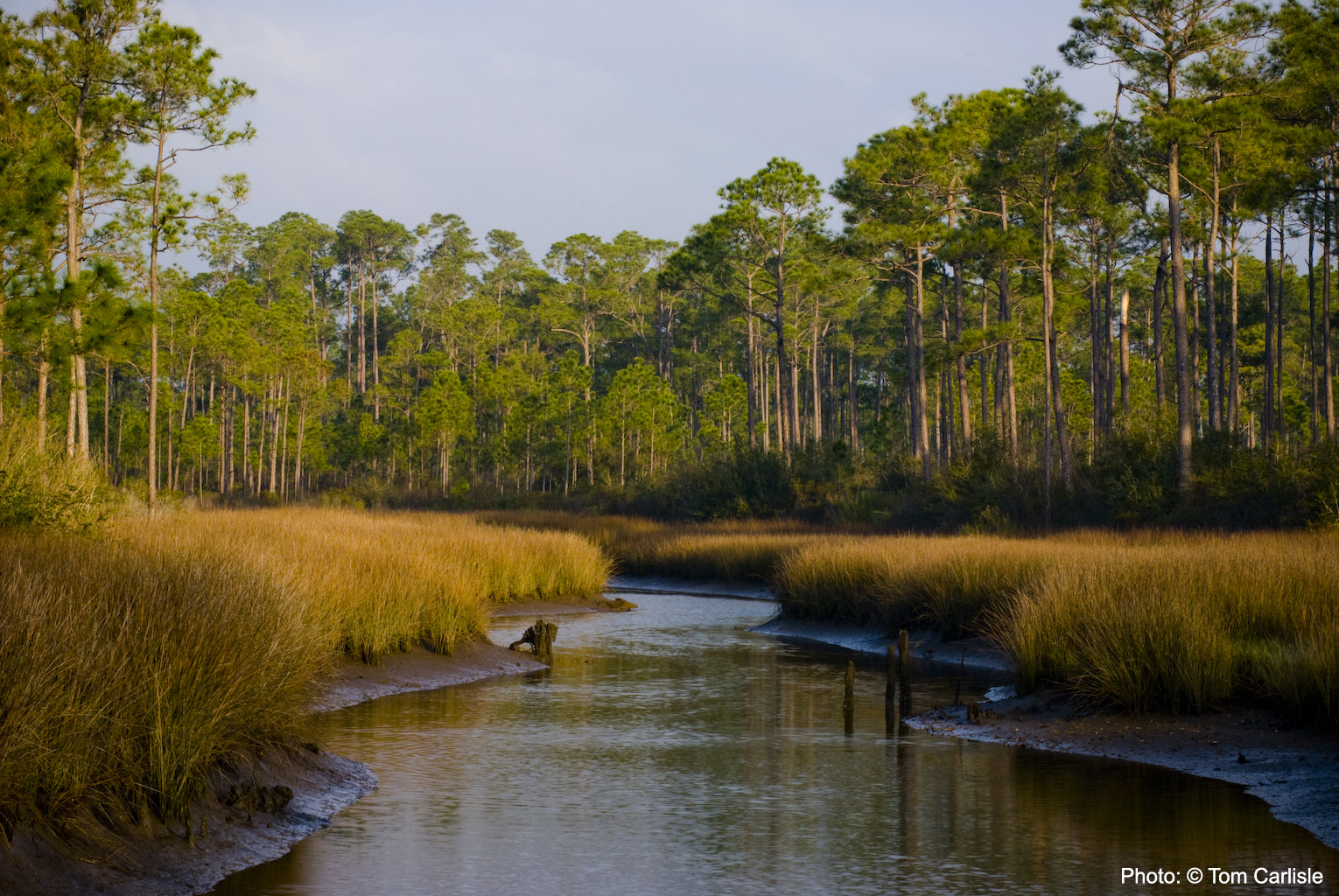 Water channeling into Grand Bay, Mississippi from a marsh area surrounded by trees. Photo: © Tom Carlisle