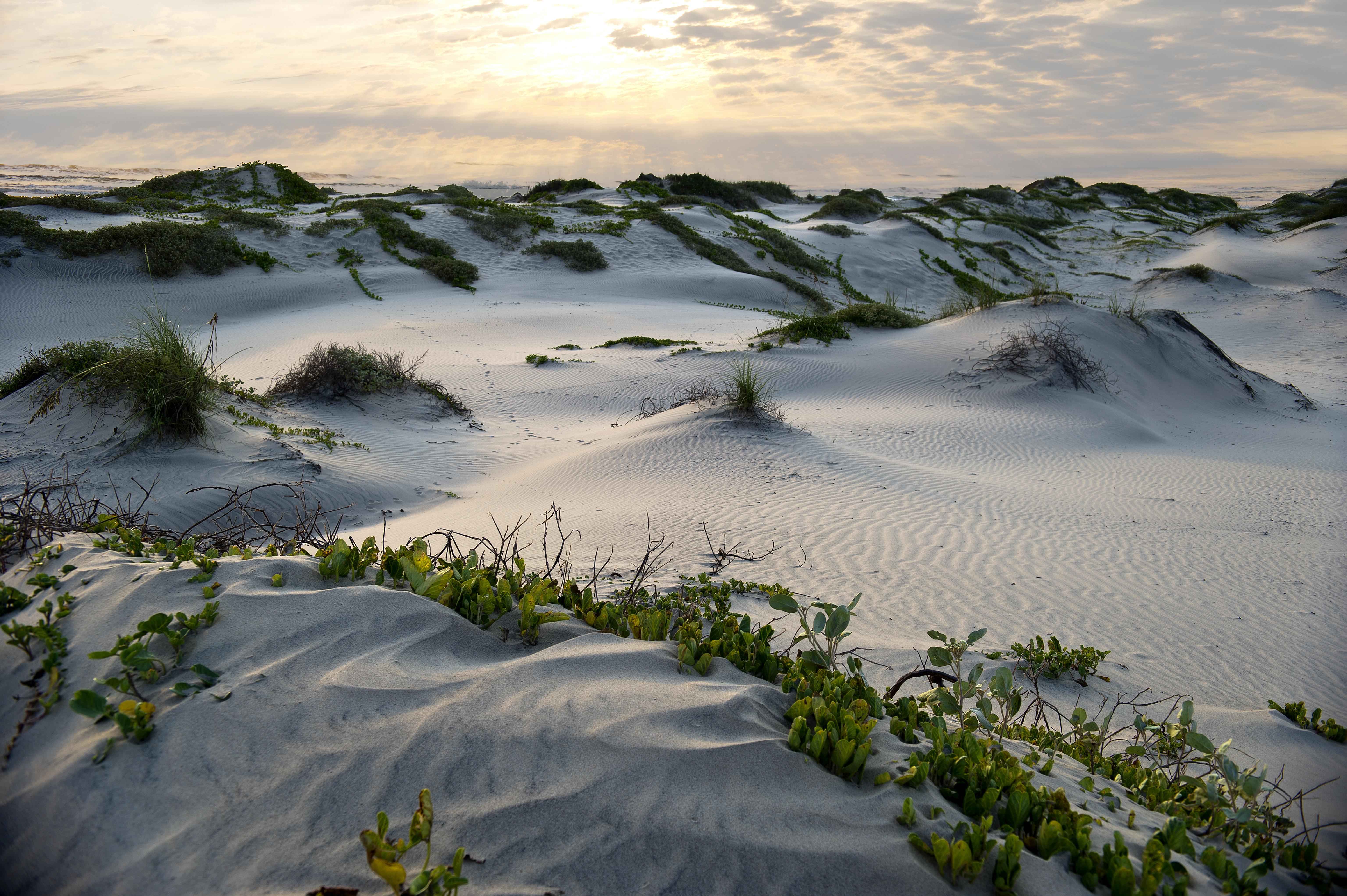 Texas dunes