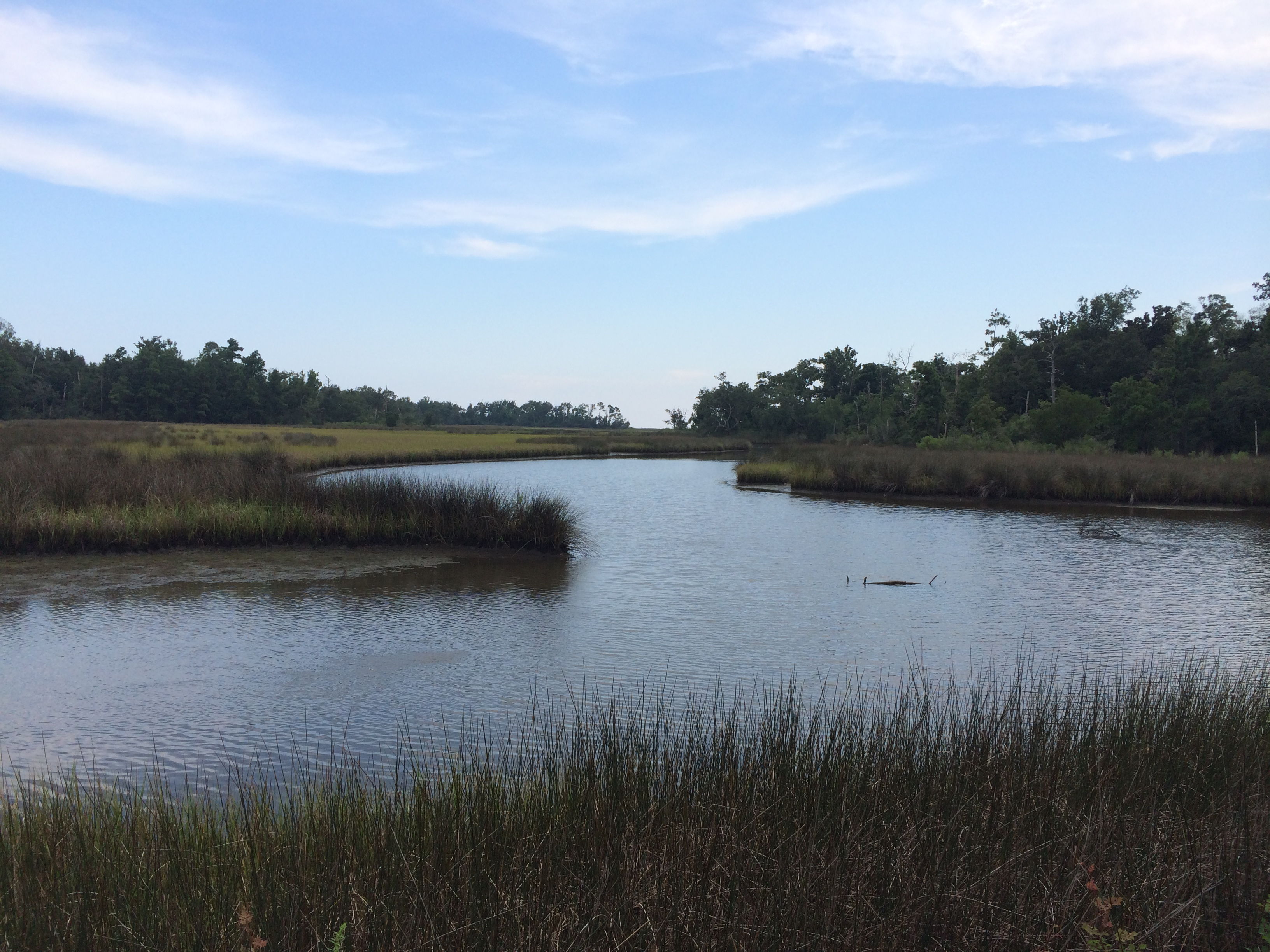 A river in Alabama meandering toward the Gulf of Mexico surrounded by marsh
