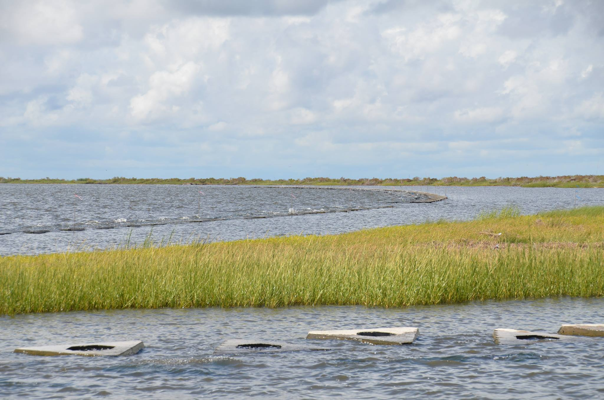 Marsh and water habitat in Louisiana. Credit: Coastal Protection and Restoration Authority.