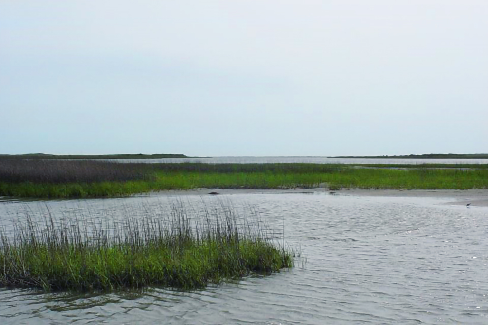 Landscape view of marsh and tidal wetlands on the Louisiana coast.