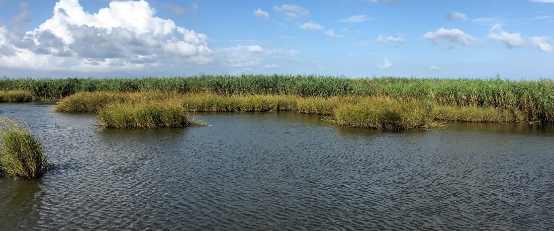 Louisiana Trustees Approve Almost $215 Million to Restore Ridge and Marsh Habitat