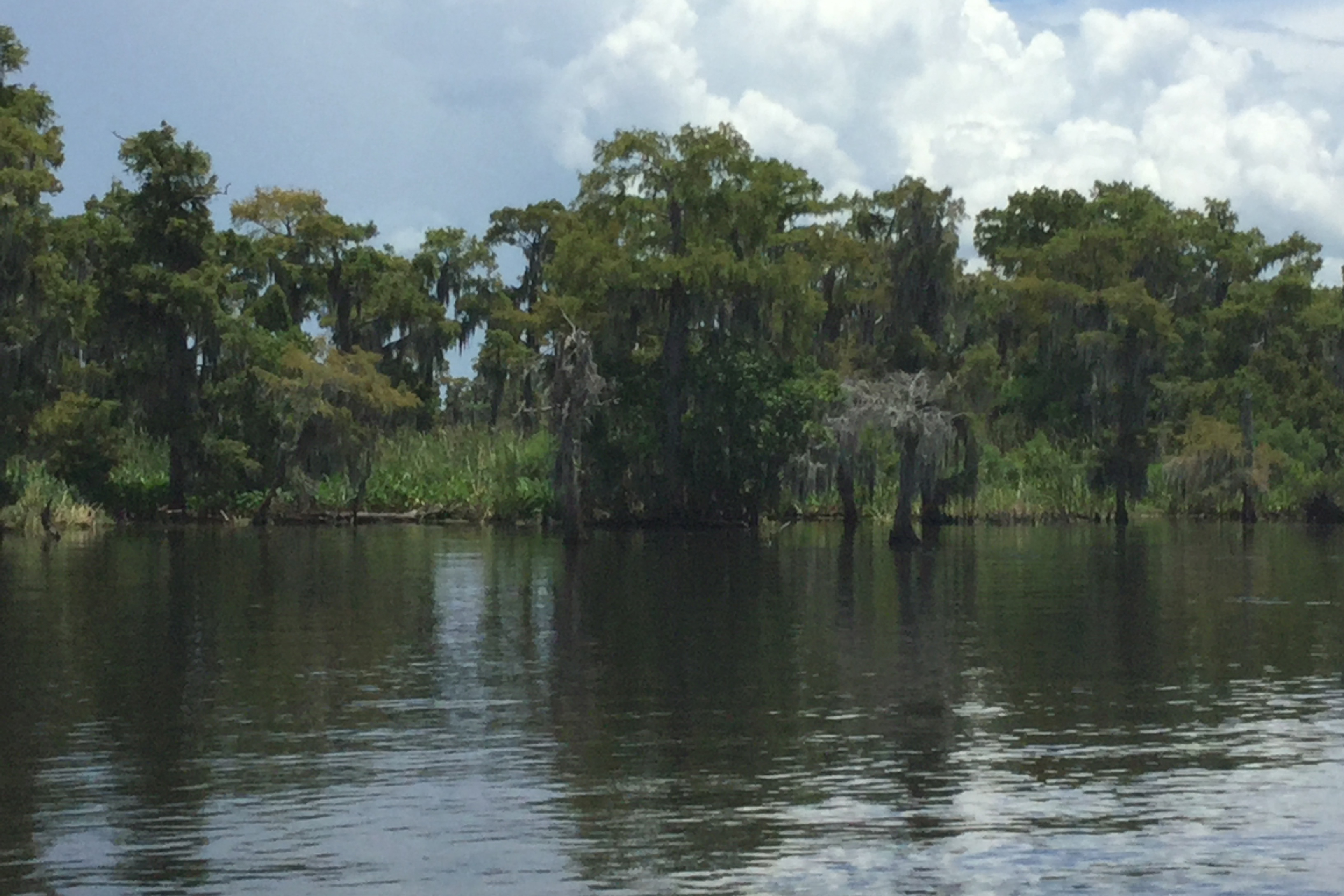A shore in Louisiana's Lake Salvador with trees on the bank.