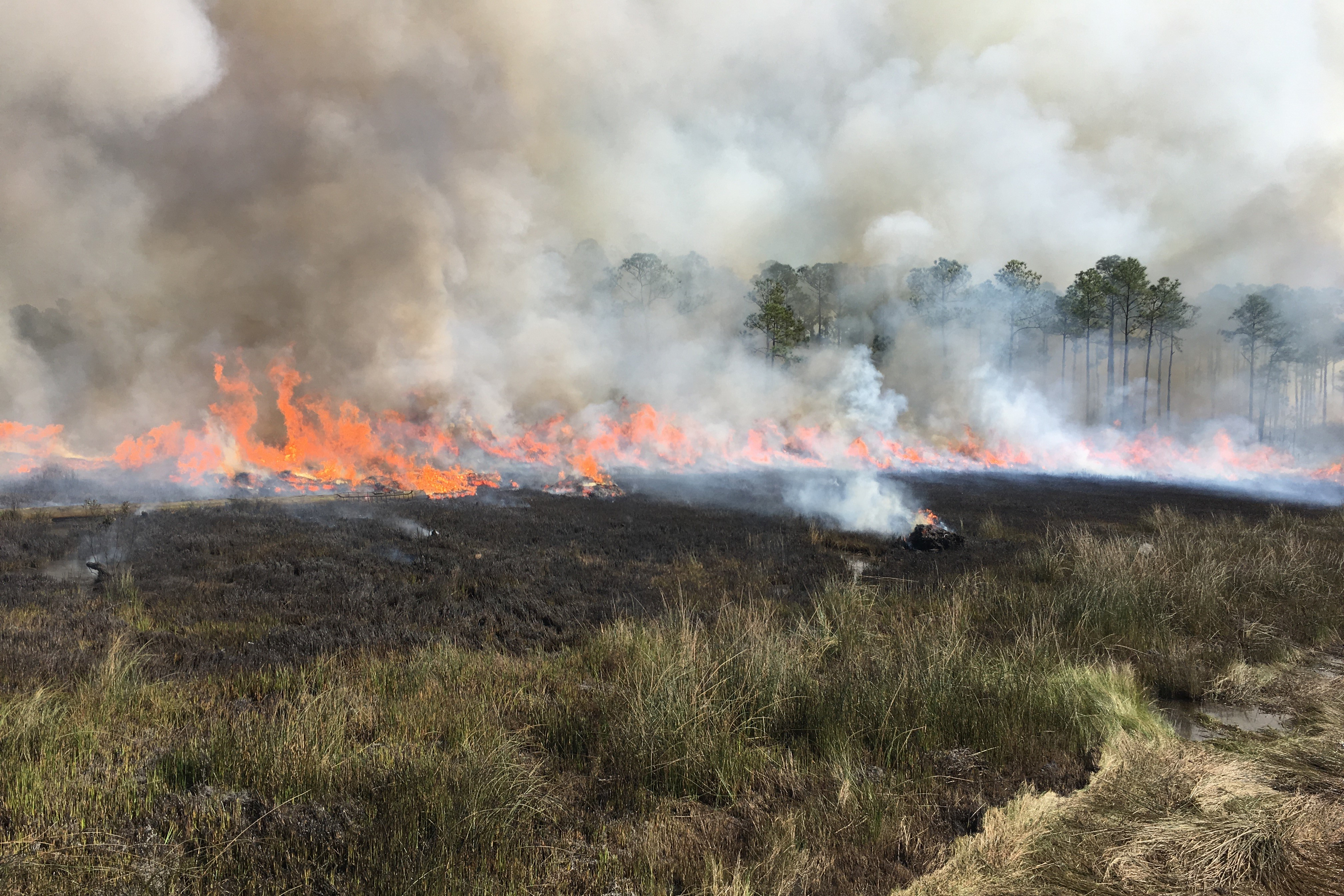 A prescribed burn in Grand Bay NWR fills the air with flames and smoke.