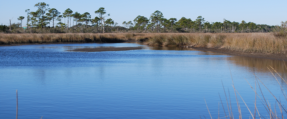 Gulf Spill Restoration: Two Years After Settlement