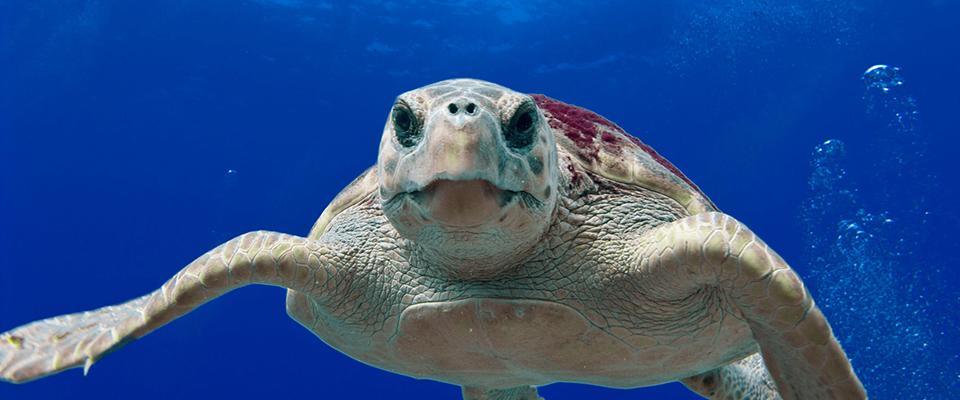 Open Ocean Trustees Initiate Restoration Planning