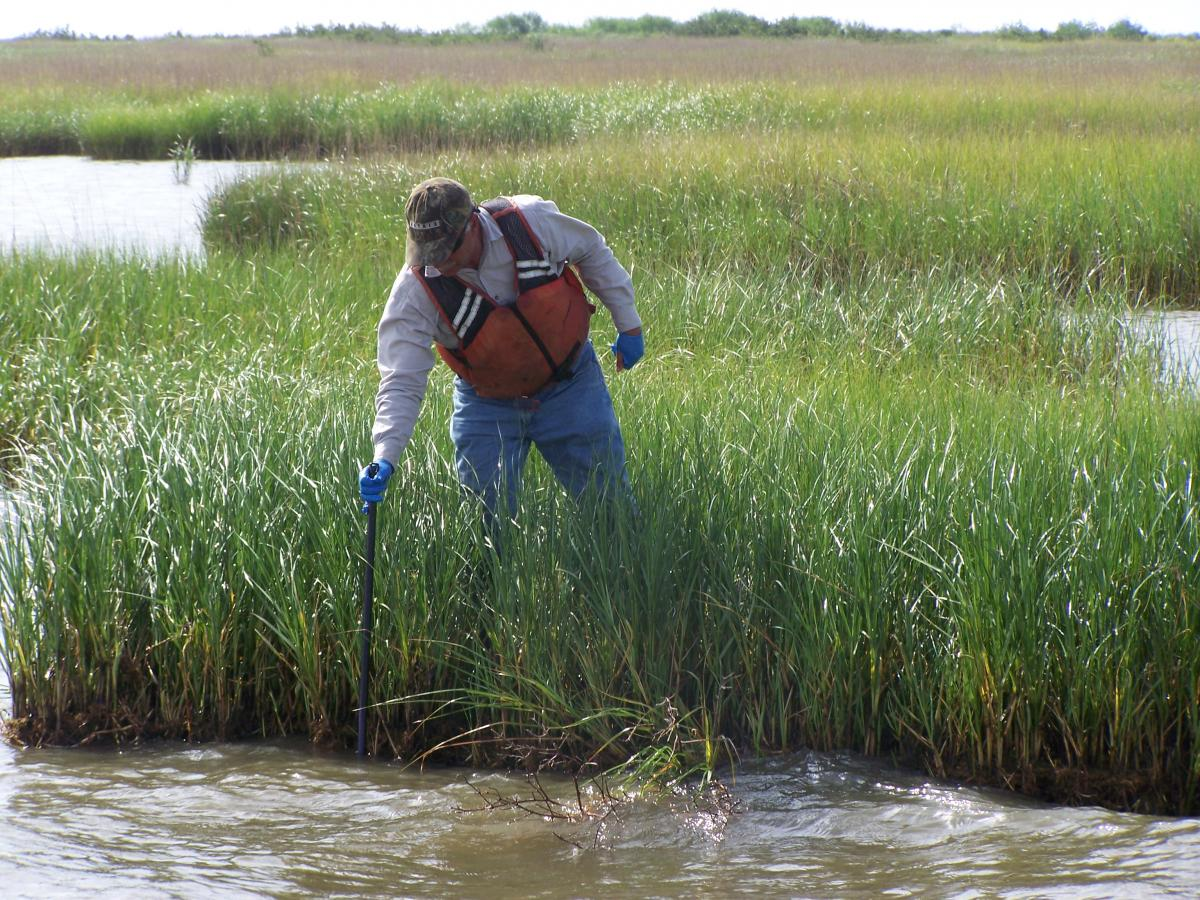 probing for oil in Louisiana marsh