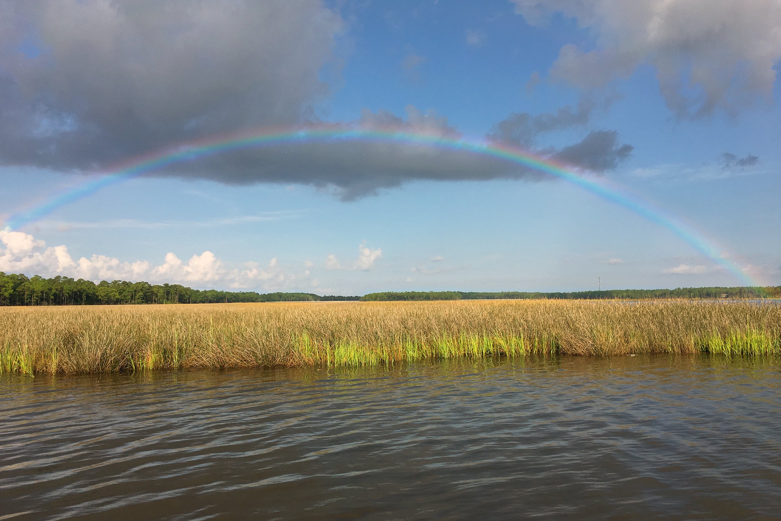 A full rainbow spread across the sky over water, marsh grass and forest.