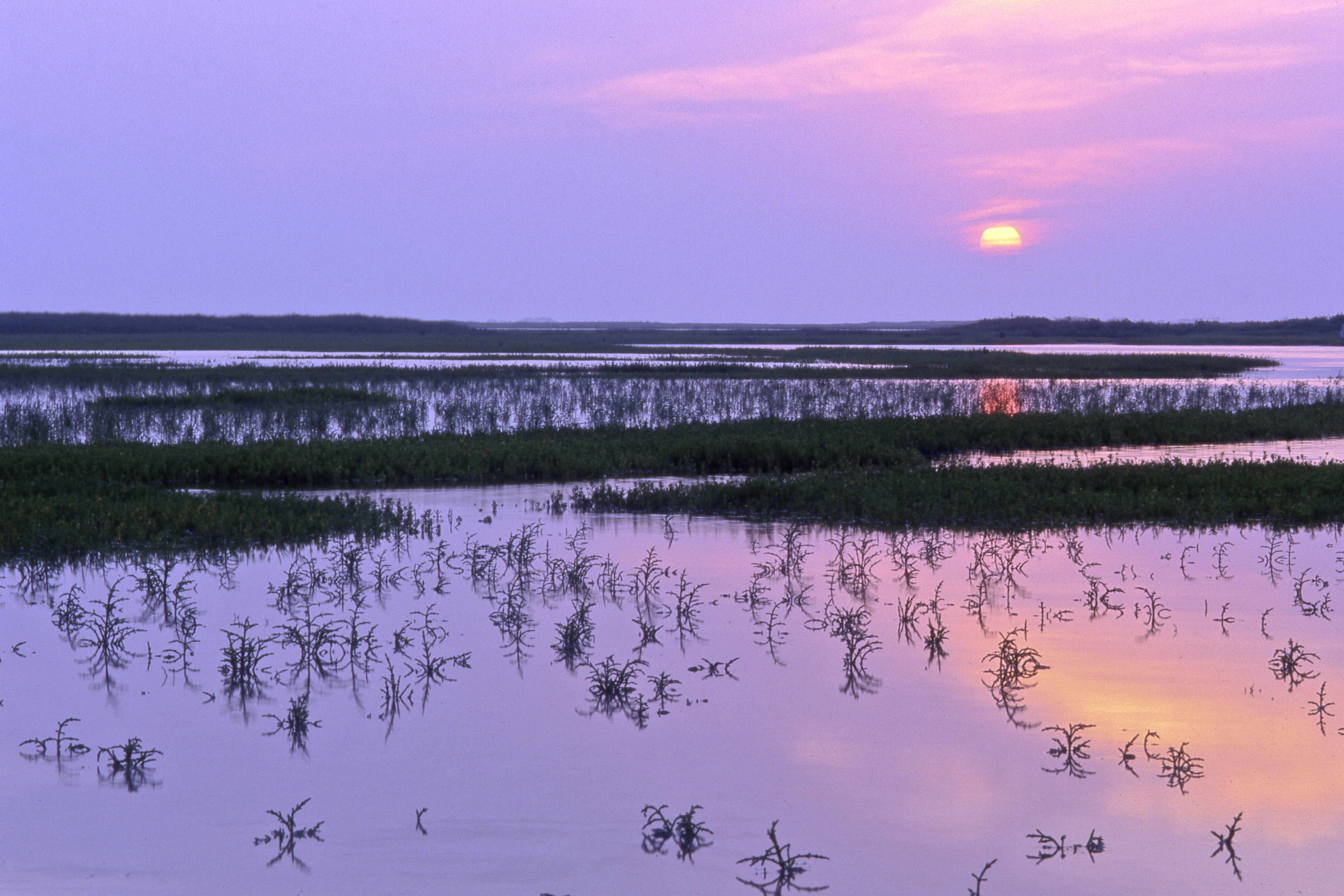 A purple sunset over a marshy Nueces Bay in Texas.