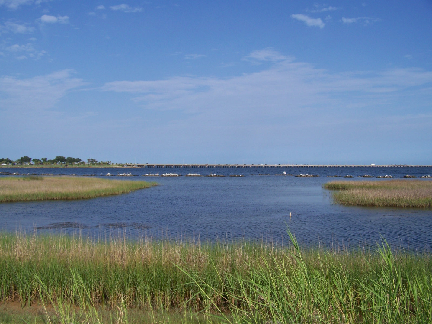 Living shoreline along the Florida Gulf coast.