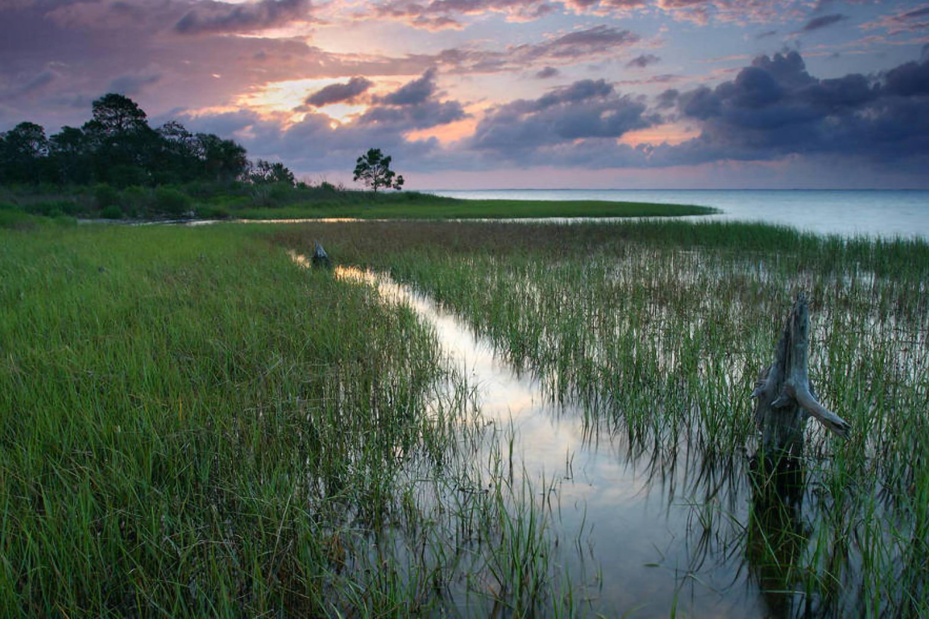 Coastal marsh habitat landscape in Florida, with marsh, trees and a sunset.