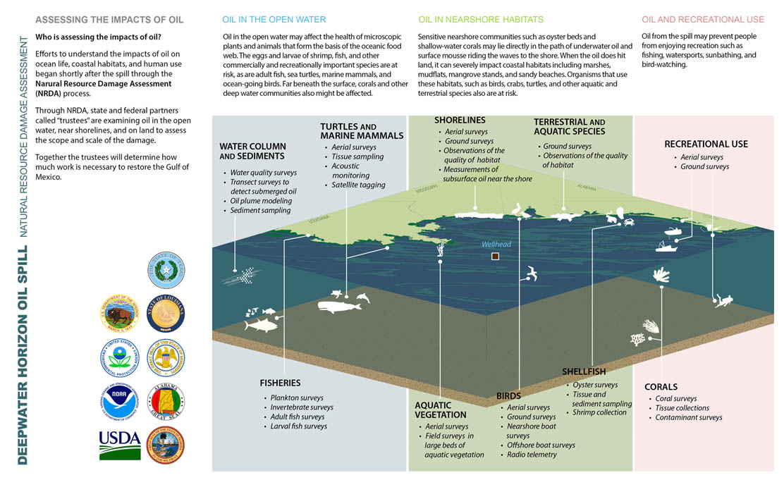 How we assess injuries – a cross-section of the Gulf of Mexico.