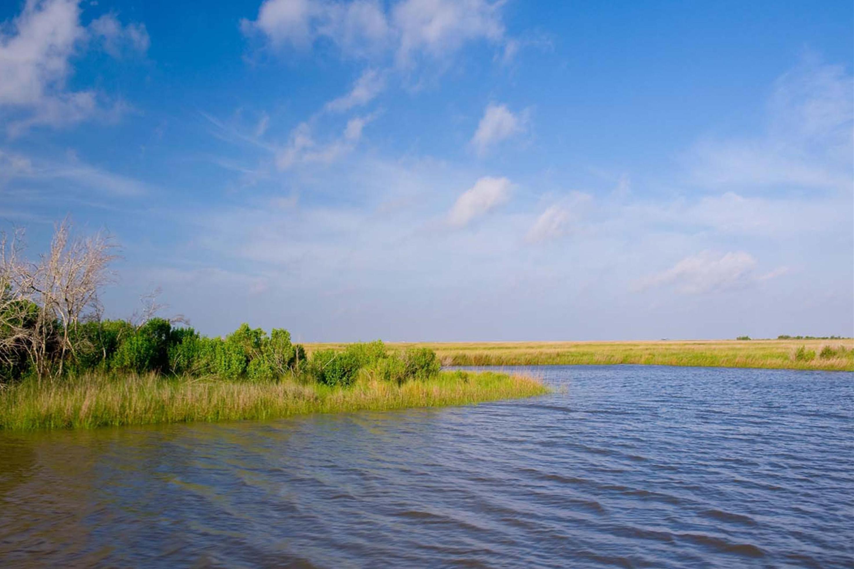 Marsh in Louisiana.