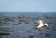 Submit Your Bird and Sturgeon Restoration Project Ideas for the Open Ocean Restoration Area