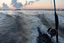 Partner Selected in Open Ocean Recreational Reef Fish Restoration Project