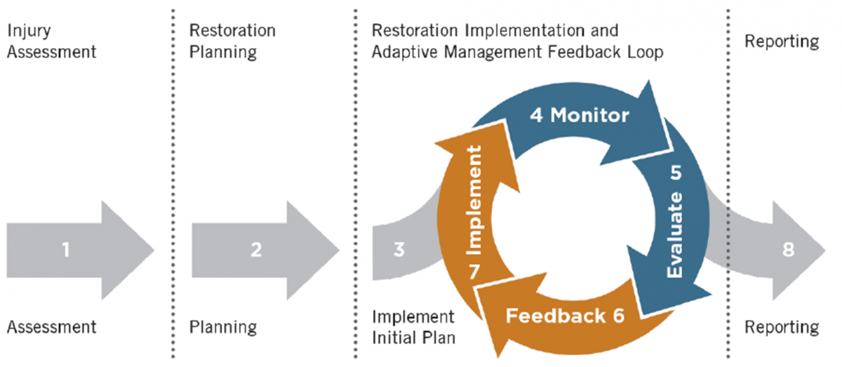 Monitoring and Adaptive Management Feedback diagram
