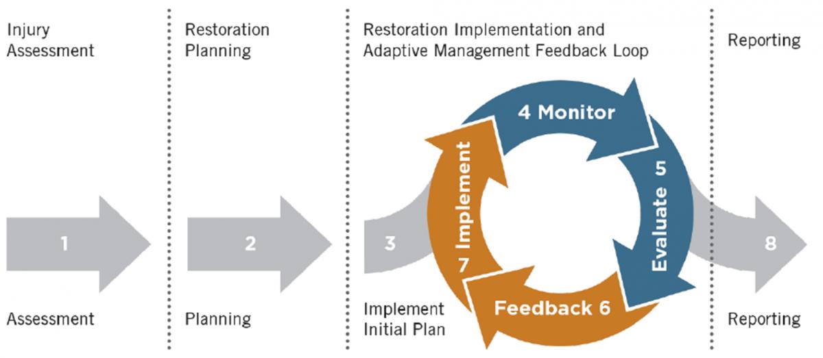 monitoring and adaptive management